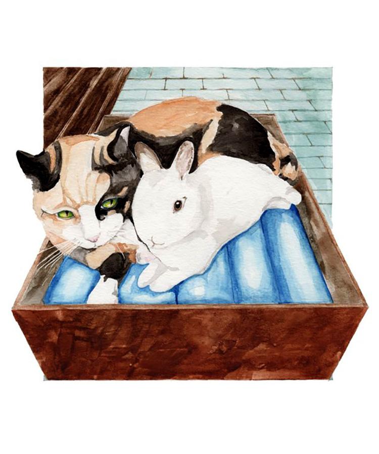 children's book illustration cat and rabbiit